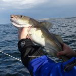 An Evening Boat Fishing Session at Redcar
