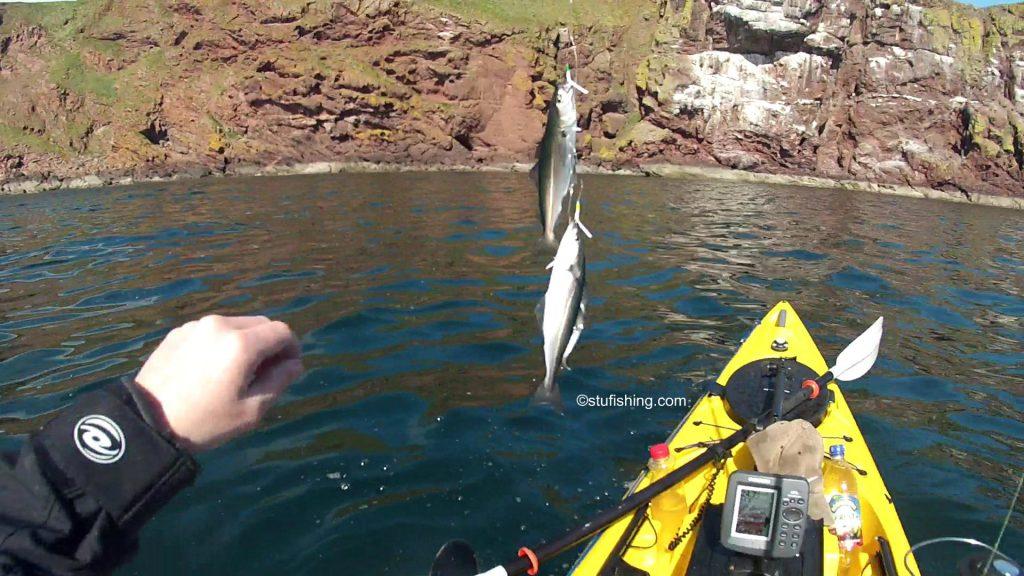 Kayak Fishing at St Abbs More Coalfish