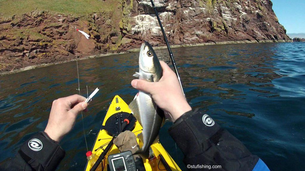 Kayak Fishing at St Abbs Coalfish