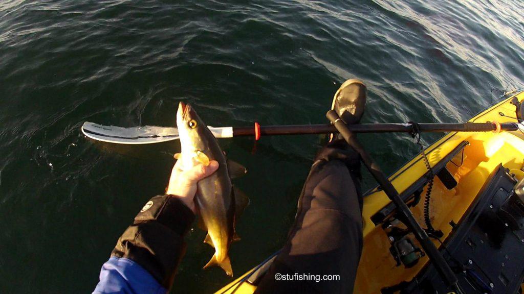 Savage Gear Sandeel Lures Fish Returned