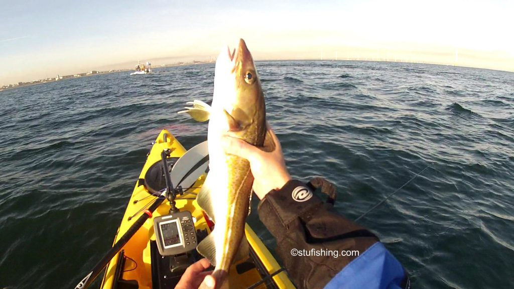 Savage Gear Sandeel Lures Yet Another Cod