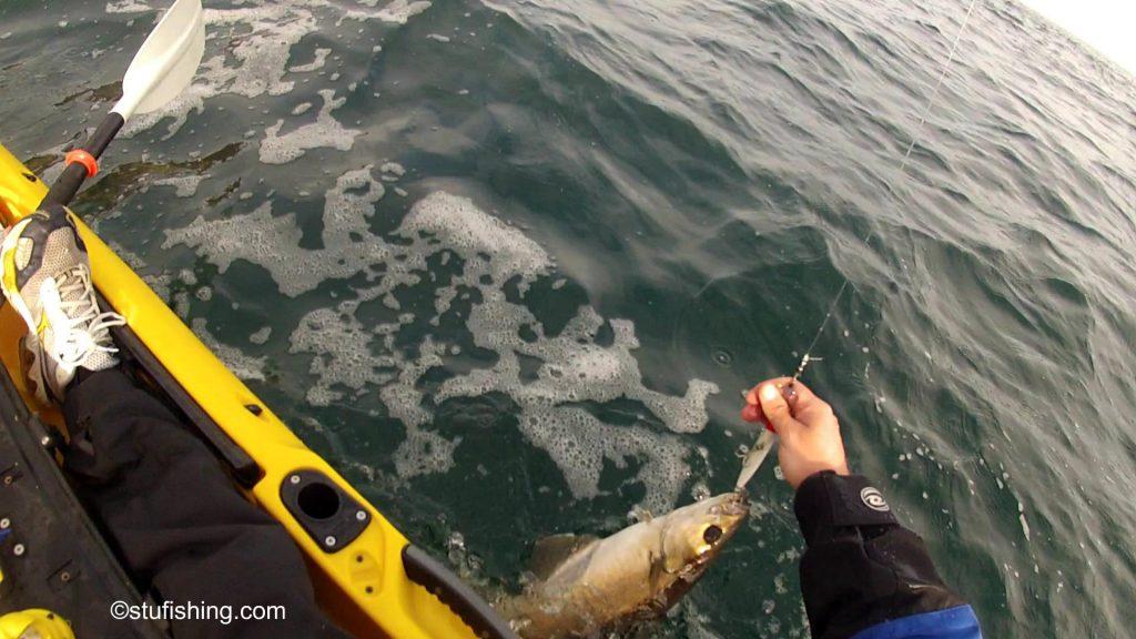 St Abbs Kayak Fishing First Pollock