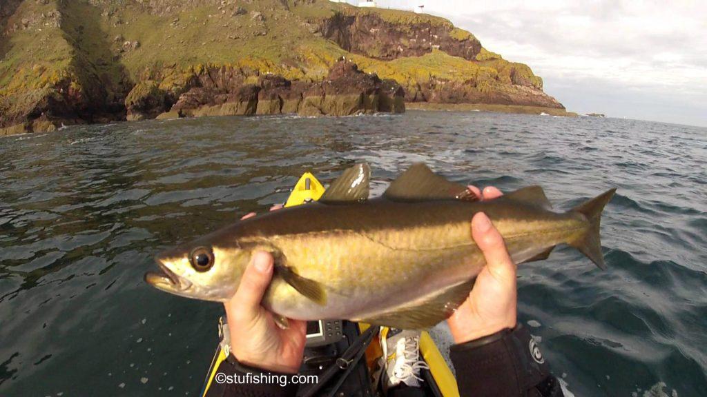 St Abbs Kayak Fishing More Pollock
