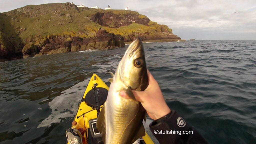 St Abbs Kayak Fishing Another Pollock