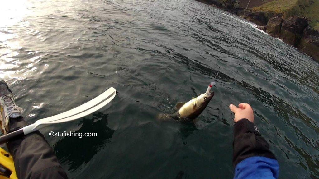 St Abbs Kayak Fishing Pollock