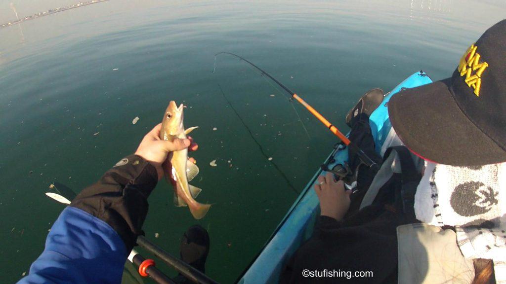Kayak Fishing Redcar Codling 3